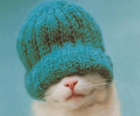avatar_cat_knit_hat